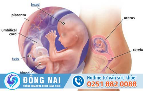 Thai 11 tuần tuổi nên phá